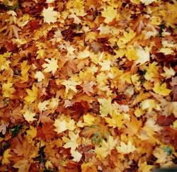 Herbst-Psalm