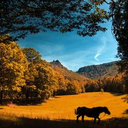 Wanderndes Pferd