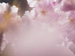 Frühlingsgeblüt
