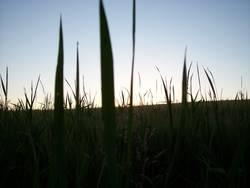 Blick aus dem Felde