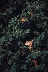 Blätter in Blättern