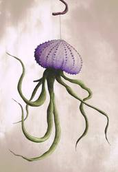Muschelkrakenpflanze