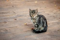 Tabby cat with on wood larder