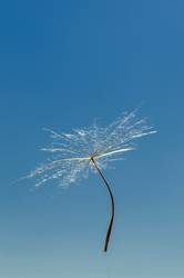 Air dandelion