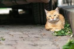 cat portrait in the street