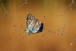 Butterfly in trouble