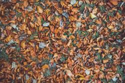 Herbstlaub auf Wiese Draufsicht