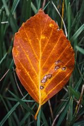 braunes Herbstblatt Makro auf Wiese