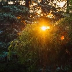 grüner Baum bei Sonnenuntergang und warmem Licht