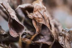 Makro von vertrockneten Herbstblättern