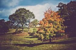 bunter Baum im Herbst +mehr Bäume