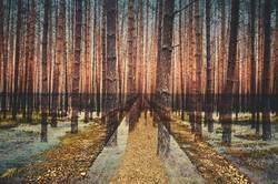 Mehrfachbelichtung Wald und Weg