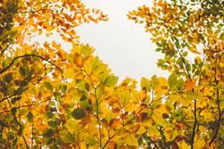 bunte Herbstblätter mit Lücke für den Himmel
