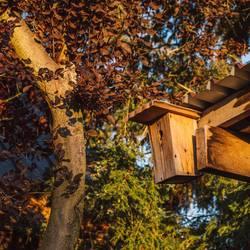 Vogelhaus an Schuppen im Garten