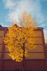 gelb gefärbter Baum im Herbst