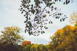 Zweig ragt in Himmel vor Herbstwald