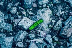 Nahaufnahme einer grünen Raupe auf einem Stein