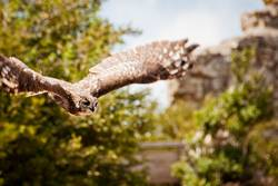 Uhu — klebt gut und fliegen kann er auch