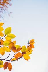 bunte Herbstblätter ragen in den Himmel