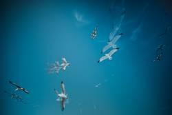 Mehrfachbelichtung Möwen kreisen am blauen Himmel