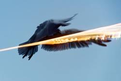 fliegende Möwe an der Ostsee