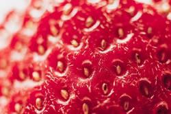 Die Erdbeere IV