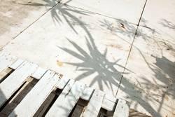 Schatten von Palmen