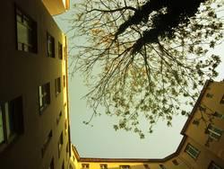 Hofgrün
