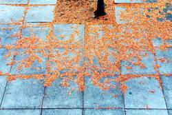 Wie herrrrrlich ists doch im Herbst...