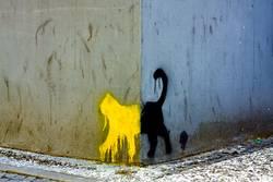 Schwarze Katze von links nach rechts