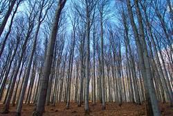 Wald vor Bäumen