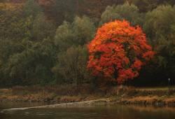 Baumglühen am Donauufer