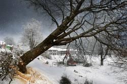 Baum fällt