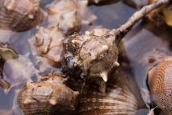 details of sea snails