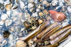 Meeresfrüchte am Markt