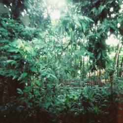 Dschungel, Lochbild, Lochkamera