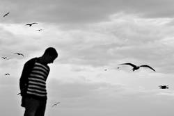 see gulls arriving