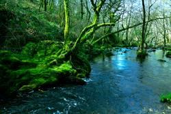 Galizische Wälder