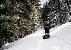 Ein Ski im Wald