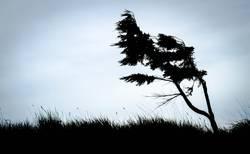 Baum, gezeichnet von Wind