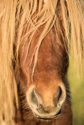 Pony so oder so