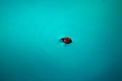 Insekt im Pool