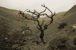 Dead tree of life