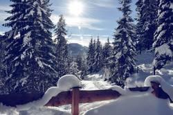 Schnee mit Sonne III.