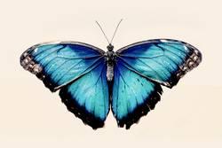 Blauer Morpho-Schmetterling