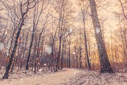 Morning snow falling in a forest with a beautiful sunrise