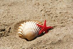 Shell and starfish on the sand