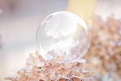 Seifenblase auf gefrorenen Hortensienblüten
