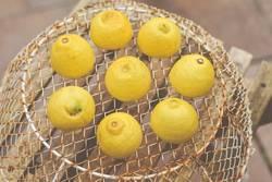 Wenn Dir das Leben Zitronen schenkt...