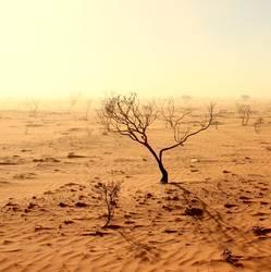Dürre vor dem Sturm